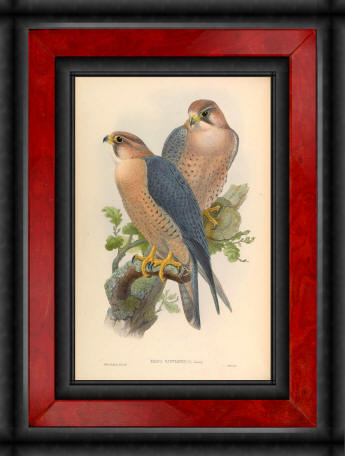 Antique bird prints image collection 15