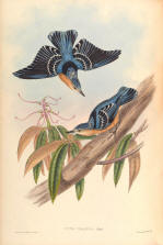 Antique bird prints image collection 07