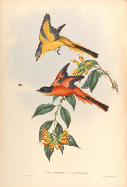 Antique bird prints image collection 14