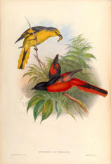 Antique bird prints image collection 03