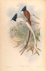 Antique bird prints image collection 09