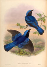 Antique bird prints image collection 11
